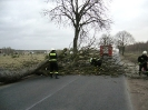 Powalone drzewo Zamosc08.04.2011